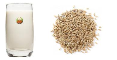 Bebida de alpiste: bebida vegetal de grano, cereal o pseudocereal