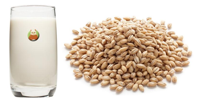 Bebida de cebada - Bebida vegetal de grano, cereal o pseudocereal