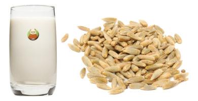 Bebida de centeno - Bebida vegetal de grano, cereal o pseudocereal