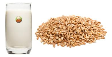 Bebida de espelta - Bebida vegetal de grano, cereal o pseudocereal
