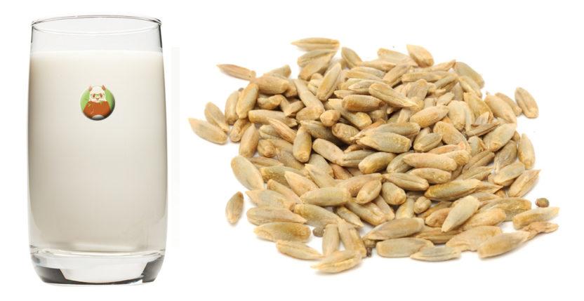 Bebida de semilla de girasol - Bebida vegetal de semilla