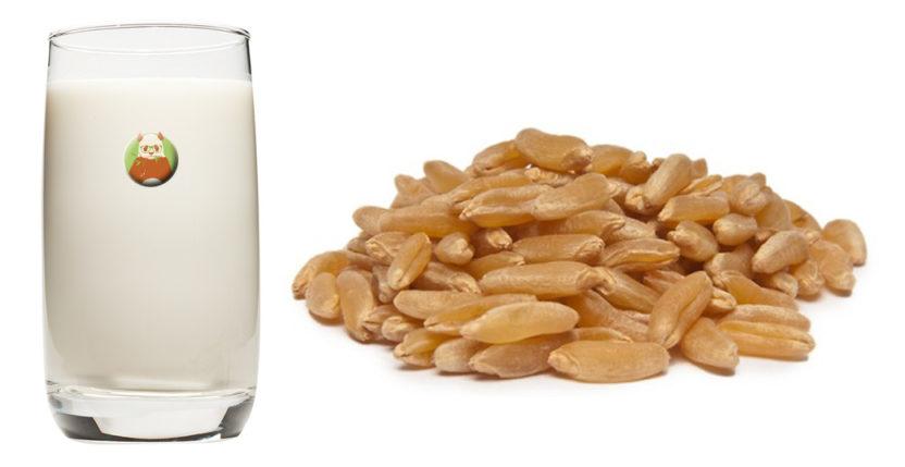 Bebida de kamut - Bebida vegetal de grano, cereal o pseudocereal