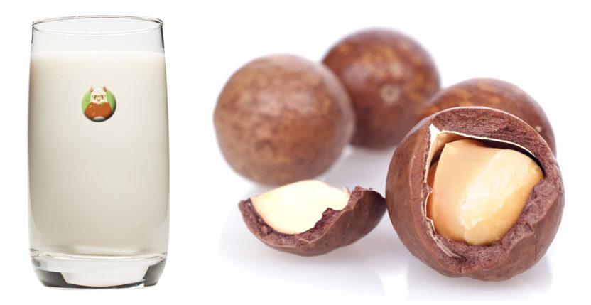Bebida de nueces de macadamia - Bebida vegetal de frutos secos