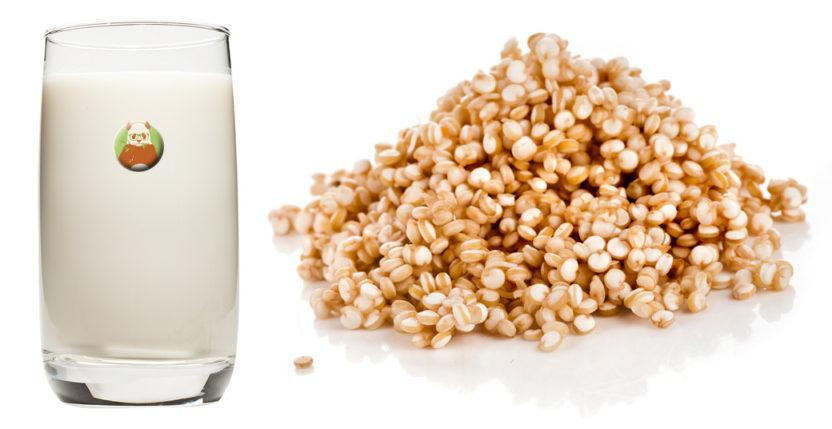 Bebida de quinua: bebida vegetal de grano, cereal o pseudocereal